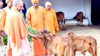Photo of गोवंश की तस्करी पर CM योगी का बड़ा एक्शन, अवैध स्लाटर हाउस बंद