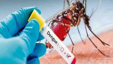 Photo of डेंगू का कहर: एक सप्ताह में 700 संदिग्ध PGI रोहतक पहुंचे, रोजाना जांच के लिए आ रहे 150 लोग